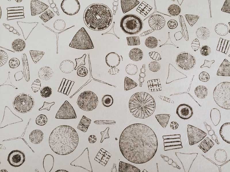 Detail from 'Diatoms' by Tana West
