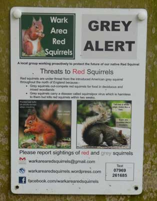 Squirrel alert poster